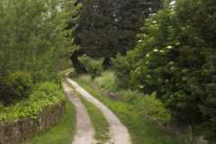 Track in the countryside Stock Image