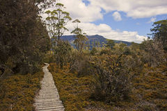 Track in Cradle Mountain - Tasmania (Australia) Royalty Free Stock Photography