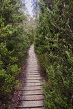 Track in Cradle Mountain - Tasmania (Australia) Stock Photography