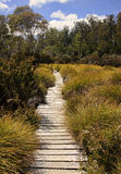 Track in Cradle Mountain - Tasmania (Australia) Stock Photo