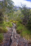 Track in Cradle Mountain - Tasmania (Australia) Royalty Free Stock Image