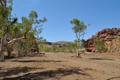 Track in dry riverbed outback australia drought Royalty Free Stock Photos