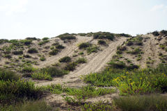 Track and dunes Stock Photos