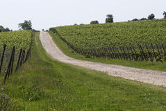 Track through English Vineyard Stock Photos