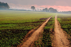 Track through farmland Stock Images