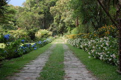 Track through flower park. Scenic view of track receding through flowery park or landscaped garden stock photos