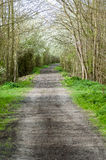 Track or footpath in spring. Rural footpath or track in spring wityh blossom and sun Royalty Free Stock Photos