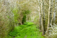Track or footpath in spring. Rural footpath or track in spring wityh blossom and sun Stock Image