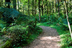 Track in the Forest Stock Photography