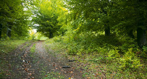 Track through forest. Scenic view of road or track receding through leafy green forest Stock Image