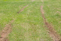 Track on grass floor, formed from the passed cars Stock Images