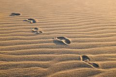 Track of human footprints on undulated sand dune. Stock Image
