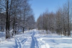 Track left by skis in beautiful wood in winter stock photo