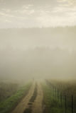 Track in misty landscape. Obscured person walking along track through misty countryside with pine forest on hill or mountain in background Royalty Free Stock Image