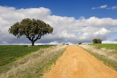 Track and oak tree Royalty Free Stock Photos
