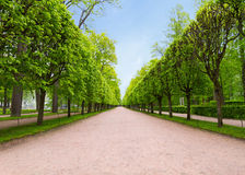 Track in the park. Walkway in the summer the park, blue sky Stock Images