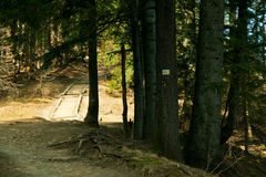 Track path in mountain forest Stock Photography