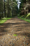 A track through a pine forest Royalty Free Stock Photography