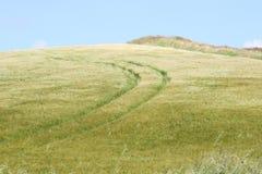 Track in the rye field. Rye field by irish coast, cork county Stock Photos