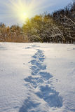 Track on snow Royalty Free Stock Images