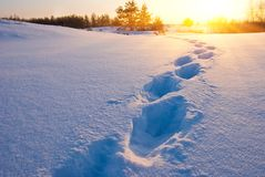 Track in a snow at the evening Stock Photos