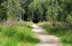 Track though English Woodland Royalty Free Stock Photography