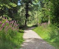 Track though English Woodland Royalty Free Stock Images