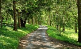 Track though English Woodland Stock Photo