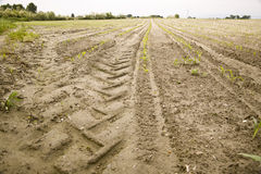 Track of the tire of a tractor in a field Royalty Free Stock Photography