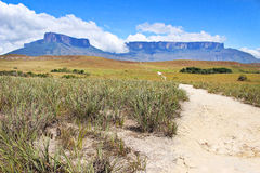 Track to Roraima. Panoramicl view of the Kukenan and Roraima Tepuy from the track Stock Photos
