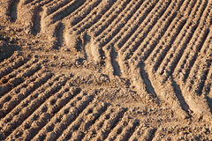 Track of tractor on the field Stock Image