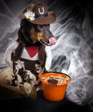 Track Or Trick. Halloween.   Dog dressed as a cowboy  lick one's Stock Image