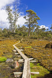 Track in Walls of Jerusalem - Tasmania (Australia) Stock Photography