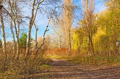 A track between willows and naked poplars Royalty Free Stock Photo