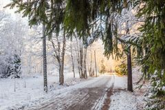Track in the winter park and green branch on foreground Royalty Free Stock Image