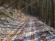 Track through wintry forest. Scenic view of snow covered track receding through wintry forest Royalty Free Stock Image