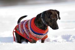 Tracker dog Stock Image