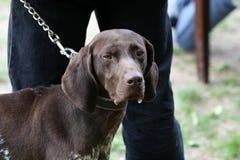 Trackhound Stock Image
