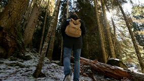 Tracking camera Low wide angle rear view of a male traveler with a backpack walking along a path in a coniferous forest. In winter. The concept of finding your stock footage