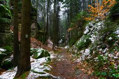 Snowy path in the forest with tourist mark on the tree royalty free stock image