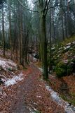 Snowy path in forest with sandstone rocks royalty free stock image