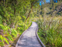 Tracking Pathway. The path way to the end of Matheson Lake around with trees stock photo
