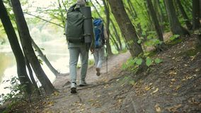 Tracking shot of a couple of tourists walking along the path in the wood. Active weekend. Trackign shot of an active retired couple of tourists walking along the stock footage