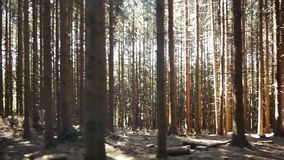 Tracking shot of a forest stock footage