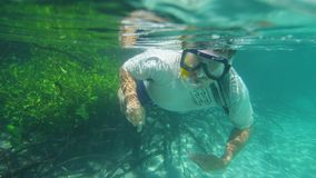 A diver beside mangroves. A tracking shot underwater of a diver swimming close to mangroves. Some mangroves are dead while some are green and healthy stock video footage