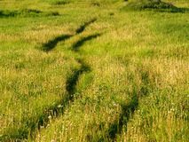 Tracks. Automobile tracks in green grass meadow Stock Photography