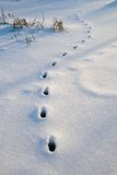 Tracks. In fresh snow royalty free stock photo