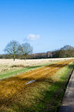 Tracks across Richmond Park Stock Images
