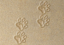 Tracks of cat in the sand Royalty Free Stock Photo