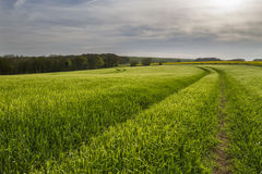 Tracks in crop field over countryside Royalty Free Stock Images